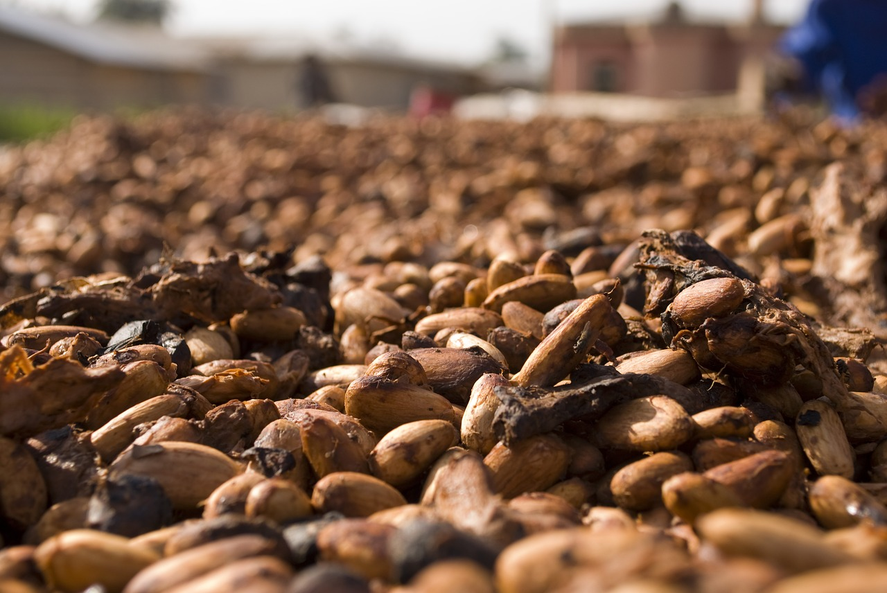 From the Farmer to the Foil: The Cacao Supply Chain Challenge