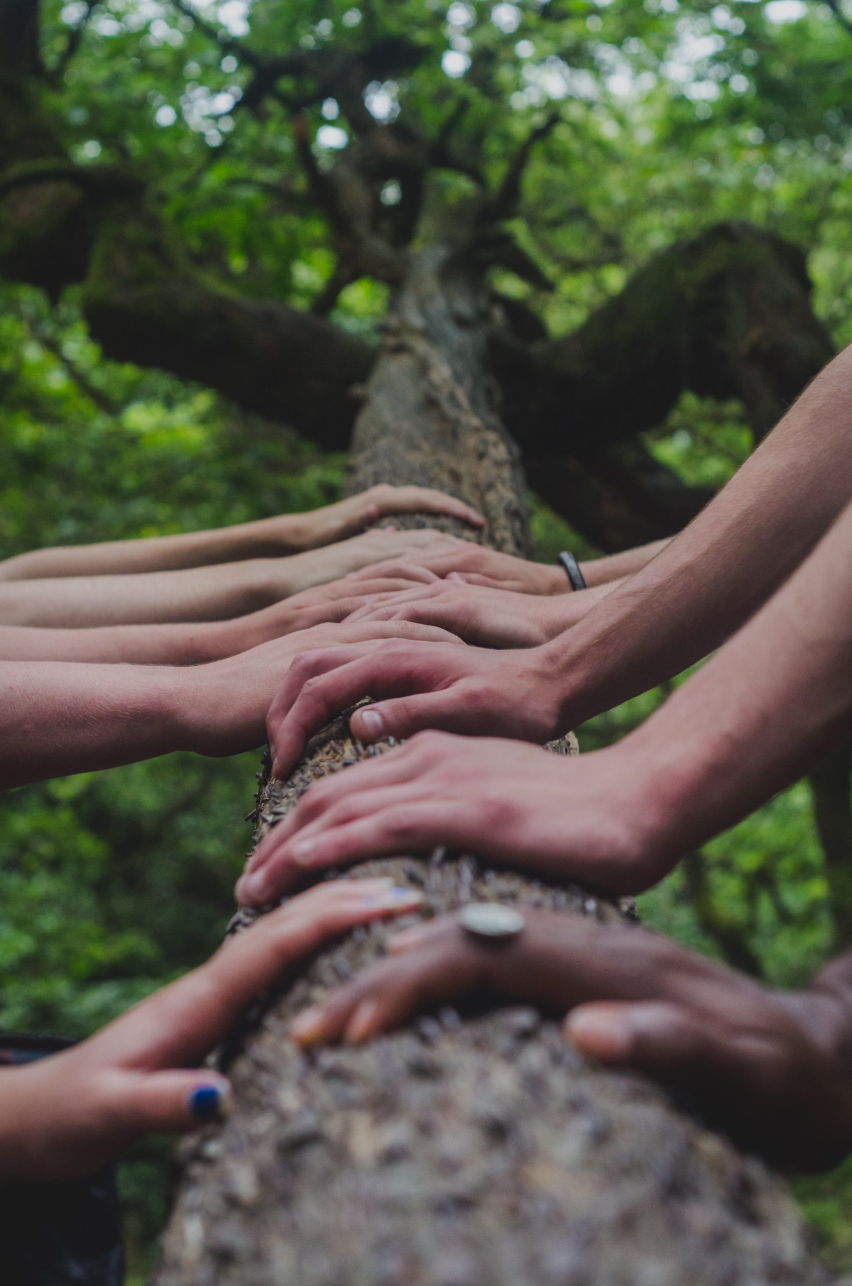 How Industry Group Collaboration Drives Sustainability Improvement