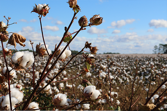 SupplyShift partners with Responsible Sourcing Network, launches tool to screen for forced labor risk in cotton supply chains