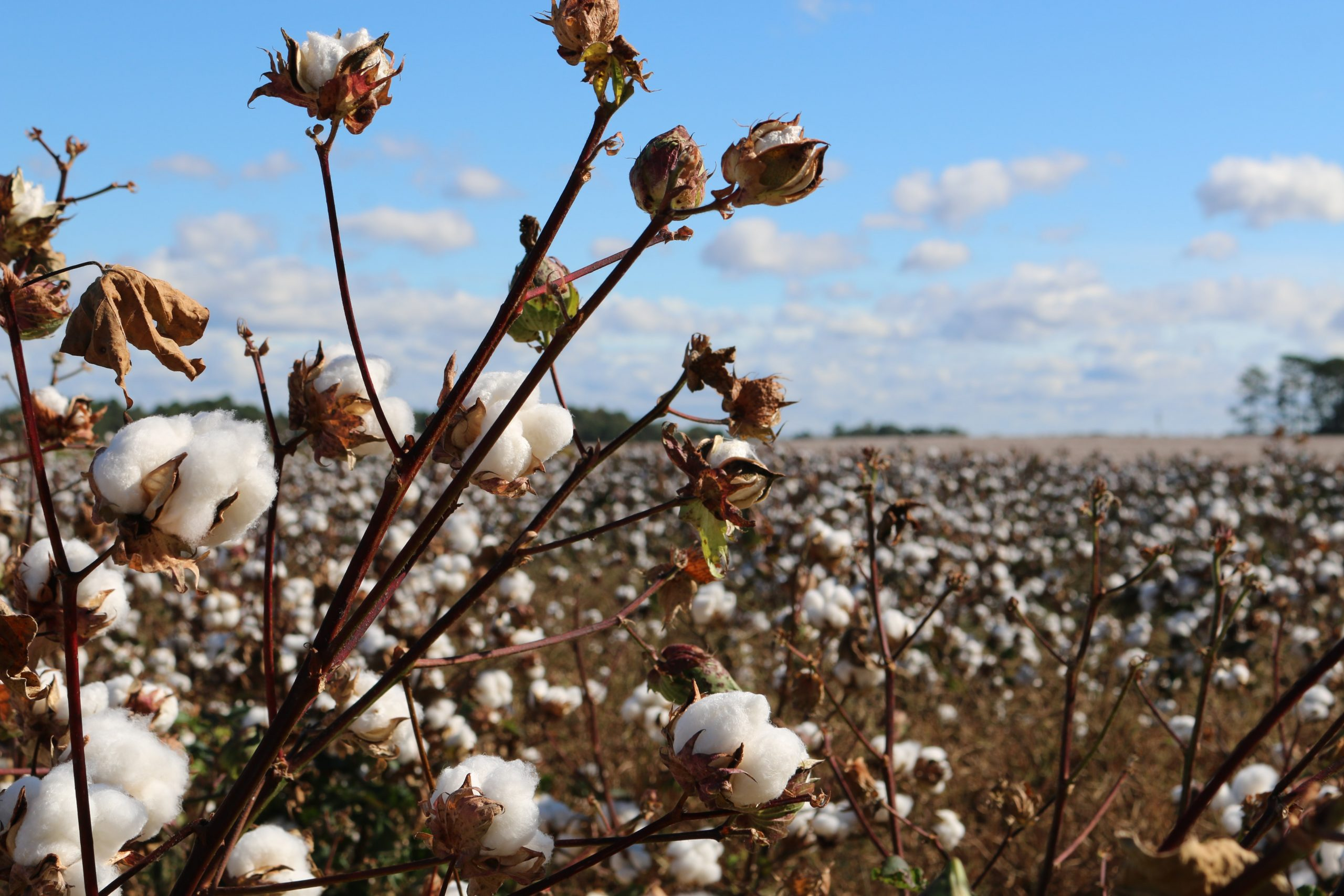 Forced labor in cotton supply chains ─ Key takeaways from our webinar